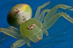 Crab Spider Stock Photos