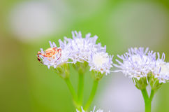 Crab spider in green nature Stock Images