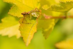 Crab Spider in a Leaf Stock Images