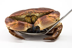 Crab on spoon. A crab on a spoon isolated on white Royalty Free Stock Image