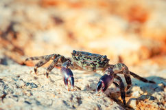 Crab stay on rock Stock Photo