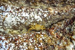 Crab on stone at the beach Stock Image