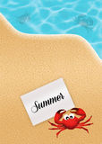 Crab in summer Stock Images