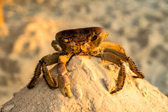 Crab - Sunset and night Curacao Views Stock Images