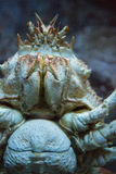 Crab swimming in a tank Stock Photo