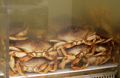 Crab in Tank Royalty Free Stock Photos