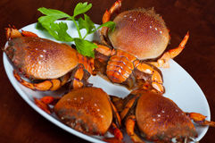 Crab team meeting. Four red crabs ready to cook Stock Photos