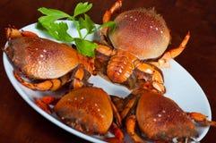 Crab team meeting Stock Photos