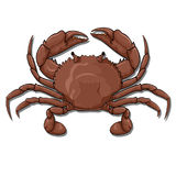 Crab, top view. Vector graphic illustration of a red crab, top view, isolated on white Stock Photo