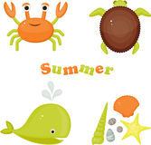 Crab, tortoise, whale, sea shells, stones and sea star Royalty Free Stock Photo