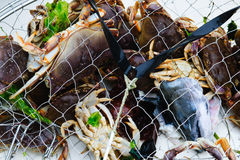 Crab Trap Royalty Free Stock Image