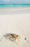 Crab on a tropical beach Royalty Free Stock Images