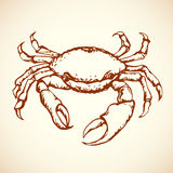 Crab. Vector drawing Stock Photography