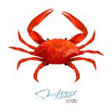 Crab vector illustration in cartoon style isolated on white background. Seafood product design.Creature floating in. Water. Inhabitant wildlife of underwater Royalty Free Stock Photography