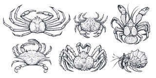 Crab vector set. Hand drawn illustrations. Crab vector set. Hand drawn illustrations of engraved line. Collection of realistic sketches various crabs, sea Royalty Free Stock Photos