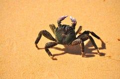 Crab Walking Stock Images
