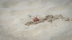 Crab walking on the beach royalty free stock image