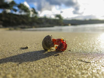 Crab walking in a beach, Spain. Hermit crab walking in a beach, Spain Stock Photo