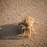 Crab walking on the sand Stock Photography