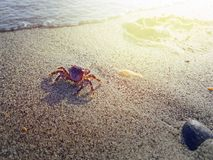 Crab walking on the sand near water royalty free stock images