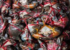 Crab was tied with rope for sale on the market,Thailand. Stock Photography