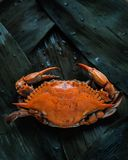 A crab stock image