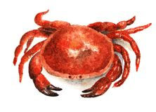 Crab. Watercolor illustration painted on white background. Crab, seafood. Illustration drawn with watercolors Stock Photography