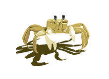 Crab white Royalty Free Stock Images