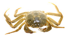 Crab on a white background Royalty Free Stock Photography