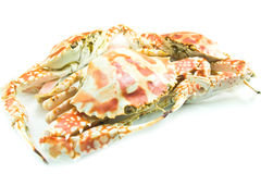 Crab  on white background Royalty Free Stock Images