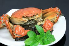 Crab on White Plate Royalty Free Stock Photography