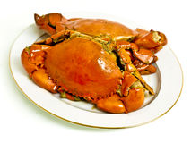 Crab on white plate Stock Images