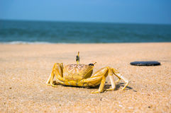 Crab on the white sand beach with blue aqua sea Stock Photo