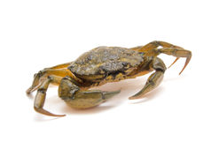 Crab on white Stock Photos