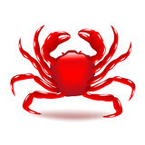 Crab  on white vector Royalty Free Stock Images