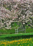 Crabapple Blossoms And A Park Bench Royalty Free Stock Photo