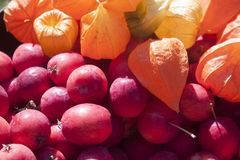 Crabapple and physalis. Pink crabapple and orange physalis, in the garden Royalty Free Stock Photo