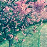 Crabapple trees and a winding path Stock Photo