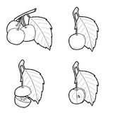 Crabapple. Vector Illustration Hand Drawn Fruit Cartoon Art royalty free illustration