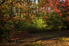 Crabapples and Bench Royalty Free Stock Photos