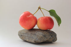 Crabapples on a Rock. Isolated on a white background Royalty Free Stock Photography