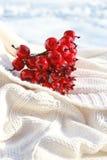 Crabapples rojos fotos de archivo