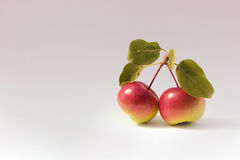 Crabapples. On a white background Royalty Free Stock Image