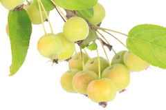 Crabapples Stock Images