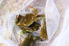 crabbing zdjęcie royalty free