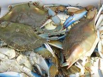crabbing Стоковое фото RF