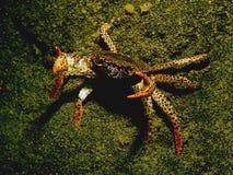 Crabby Immagini Stock Libere da Diritti