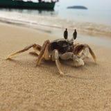 crabby fotografia de stock royalty free