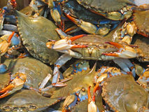 Crabby Royalty Free Stock Photography