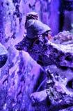Crabby pappa arkivbild